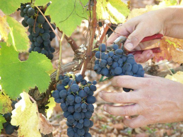 http://www.midihideaways.com/wine/coupe1.jpg