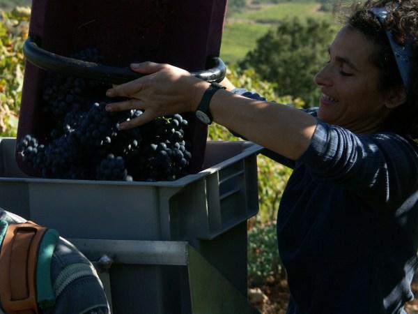 http://www.midihideaways.com/wine/hotte2.jpg
