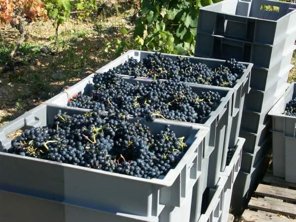 http://www.midihideaways.com/wine/raisins6.jpg